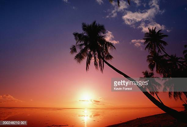 Silhouette of palm trees, Tahiti