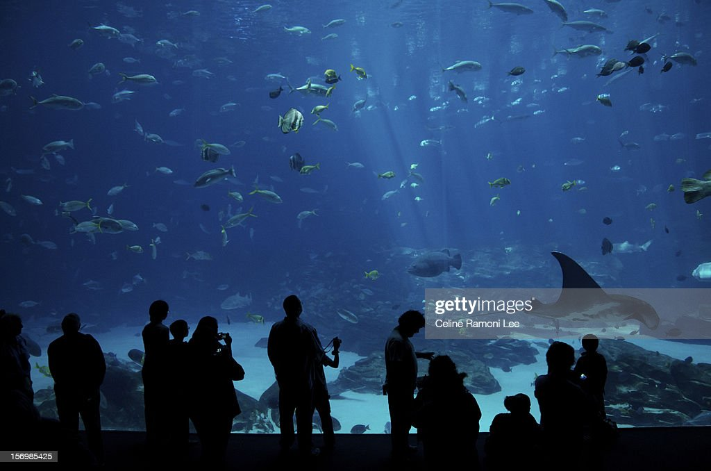 Silhouette of people in front of an aquarium : Stock Photo