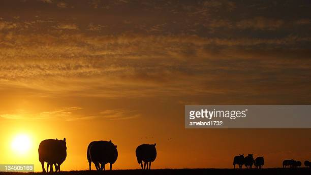 Silhouette of sheep and birds