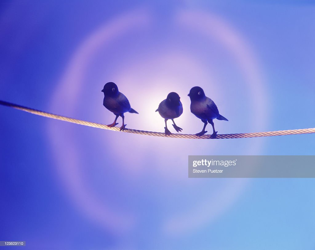 Silhouette of three birds on a wire