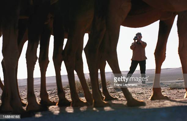 Silhouette of tourist taking photograph of camels, seen through the legs of camels, Sahara Desert.