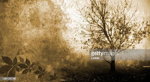 Silhouette of Tree Grunge