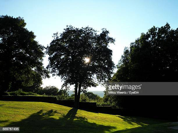 Silhouette Of Tree In Park