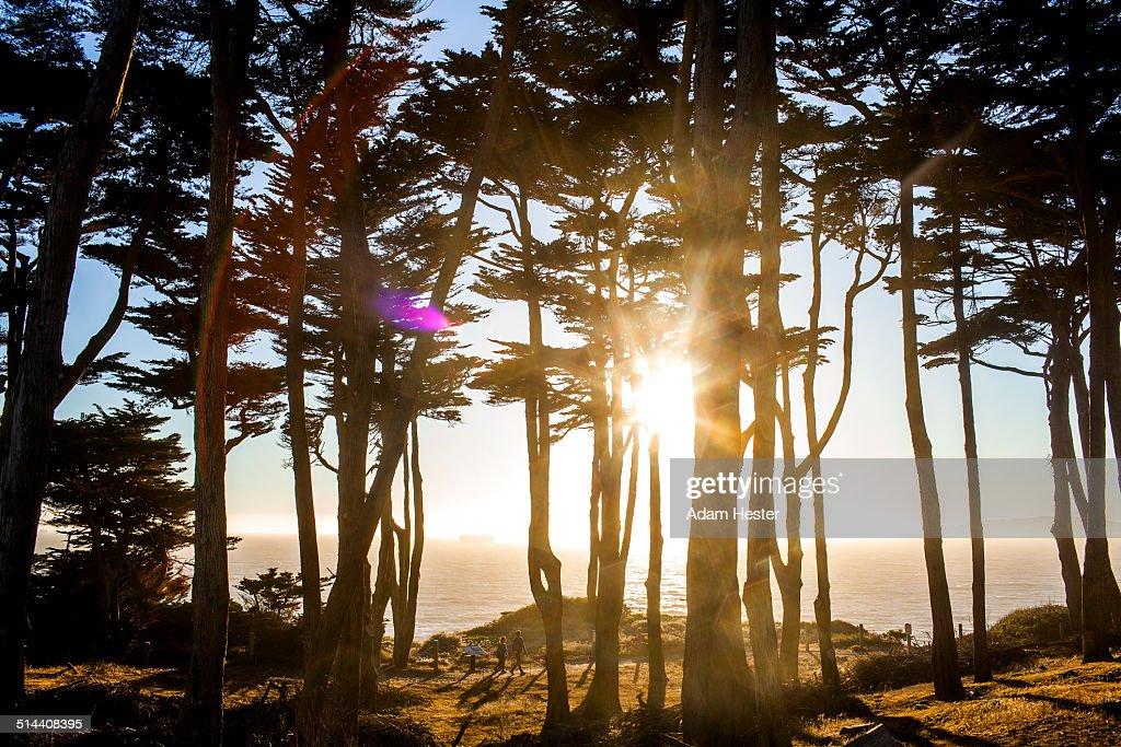 Silhouette of trees along coastline