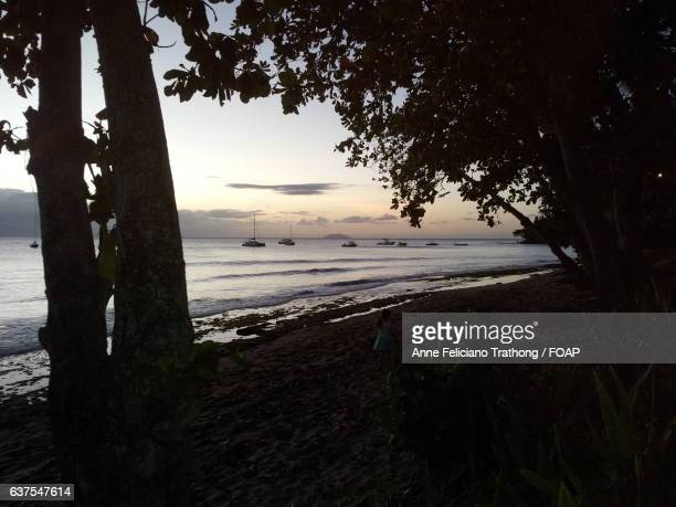 Silhouette of trees and boats