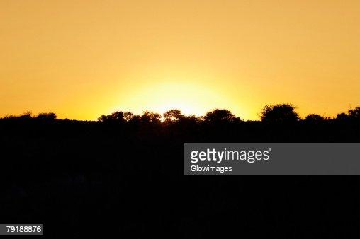 Silhouette of trees at sunset, Kalahari Desert, Botswana : Stock Photo