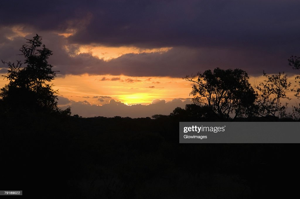 Silhouette of trees at sunset, South Africa : Foto de stock