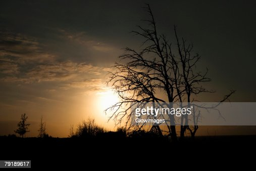 Silhouette of trees at sunset, South Point, Big Island, Hawaii Islands, USA : Foto de stock
