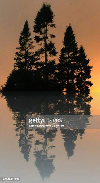 Silhouette Of Trees By Lake At Sunset