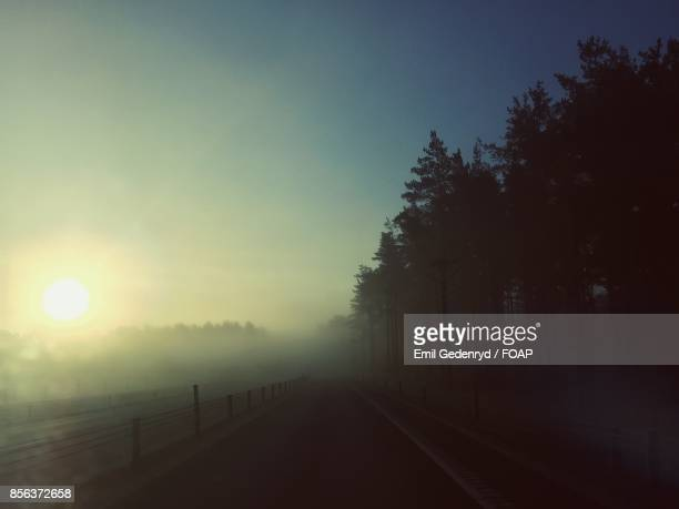 Silhouette of trees in foggy morning