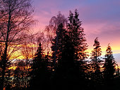 Silhouette of trees in front of colored clouds in the evening