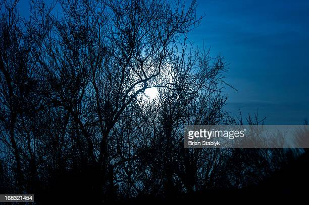 Silhouette of trees in moon light