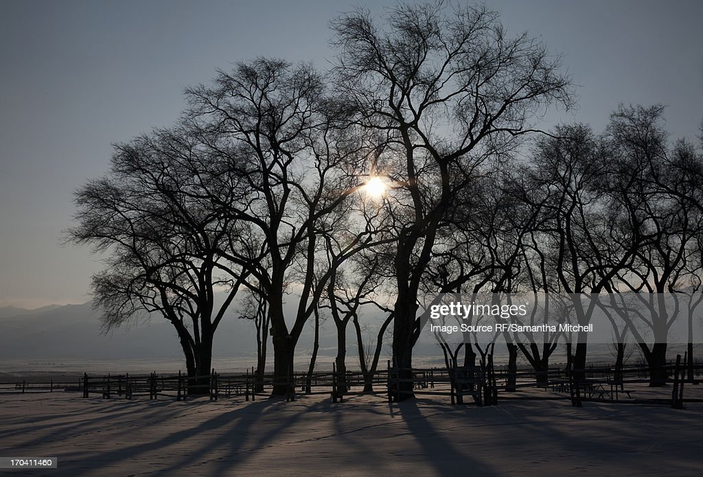 Silhouette of trees in rural landscape : Stock Photo