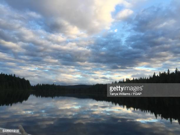Silhouette of trees reflecting on lake