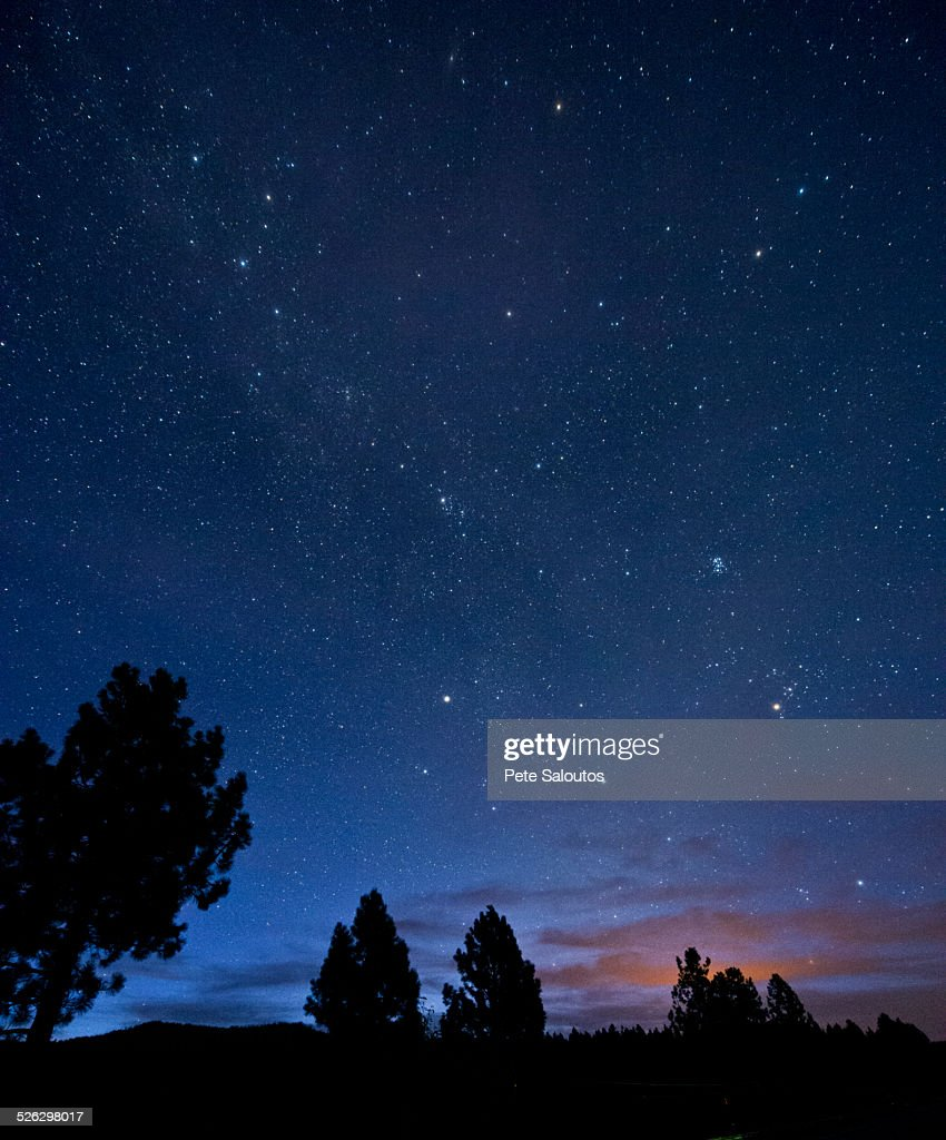 Silhouette of trees under starry night sky