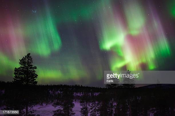 Silhouette of trees under the bright Northern Lights