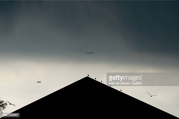 Silhouette Of Triangle Shape Roof And Birds