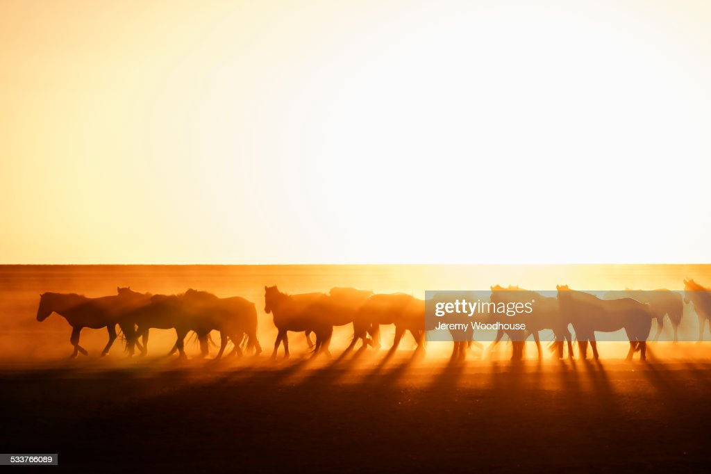 Silhouette of wild horses grazing in steppe landscape