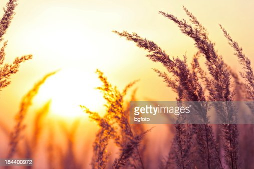 Silhouette of Wildflowers During Sunset