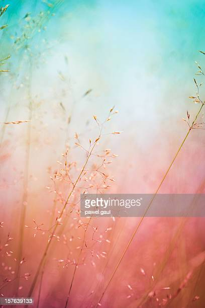 Silhouette of wildflowers in meadow during sunrise or sunset