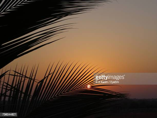 Silhouette Palm Tree Against Clear Sky At Sunset