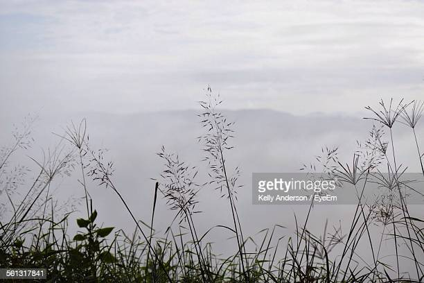 Silhouette Plants Against Misty Background