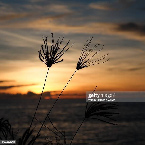 Silhouette Plants Against Sea During Sunset