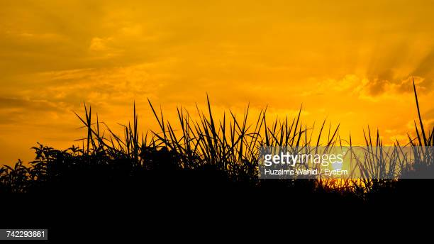 Silhouette Plants On Field Against Orange Sky