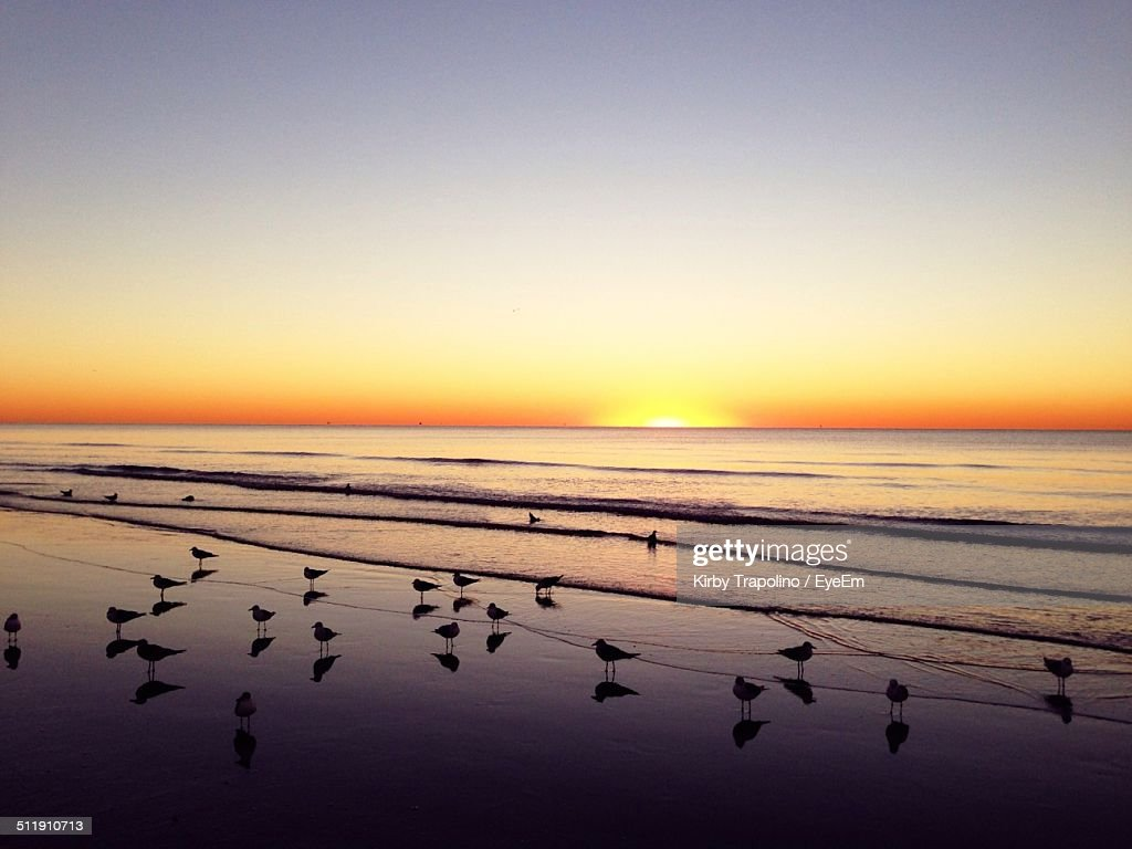 Silhouette seagulls on beach against orange sky : Stock Photo