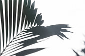 Silhouette shadow of palm leaves on white wall