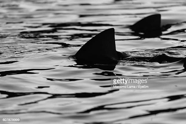 Silhouette Sharks Swimming In Sea