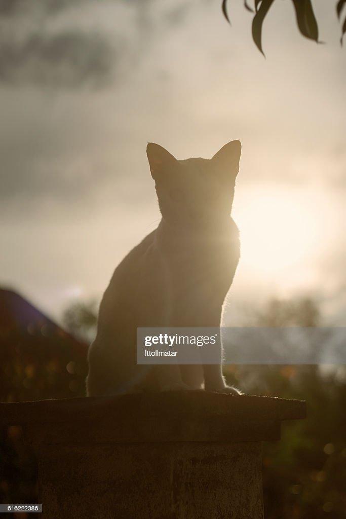 silhouette thai cat sitting on pillar with sunset light : Stock Photo