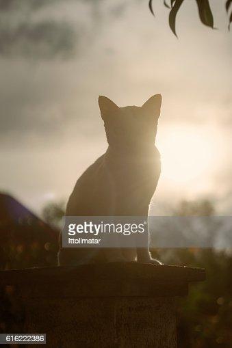 silhouette thai cat sitting on pillar with sunset light : Stockfoto