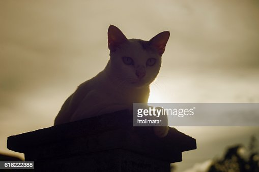 silhouette thai cat sitting on pillar with sunset light : Stock Photo