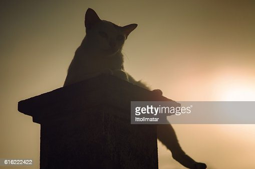 silhouette thai cat sitting on pillar with sunset light : Bildbanksbilder