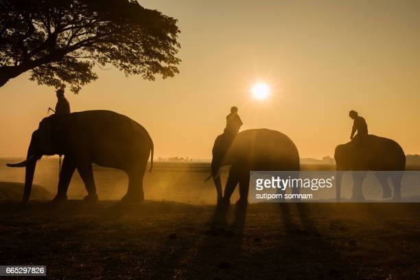 Silhouette three elephant and mahout