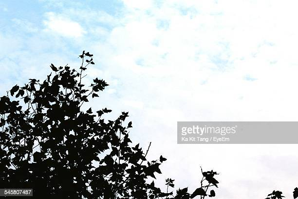Silhouette Tree Against Cloudy Sky