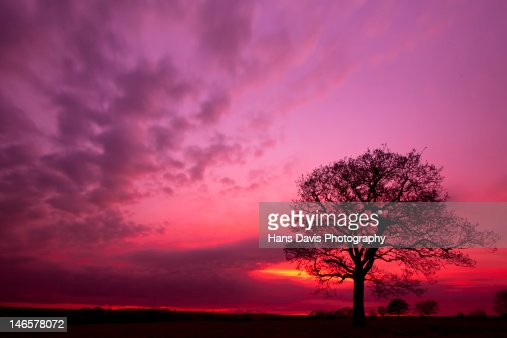 Silhouette tree at sunset in field : Stock Photo