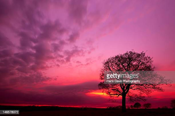 Silhouette tree at sunset in field