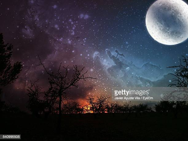 Silhouette Trees Against Moon And Star Field In Sky At Night