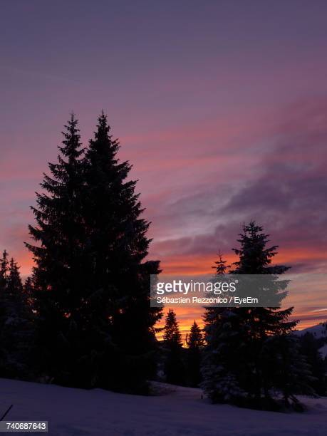 Silhouette Trees Against Sky During Winter