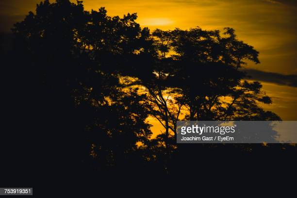 Silhouette Trees In Forest Against Sky At Sunset