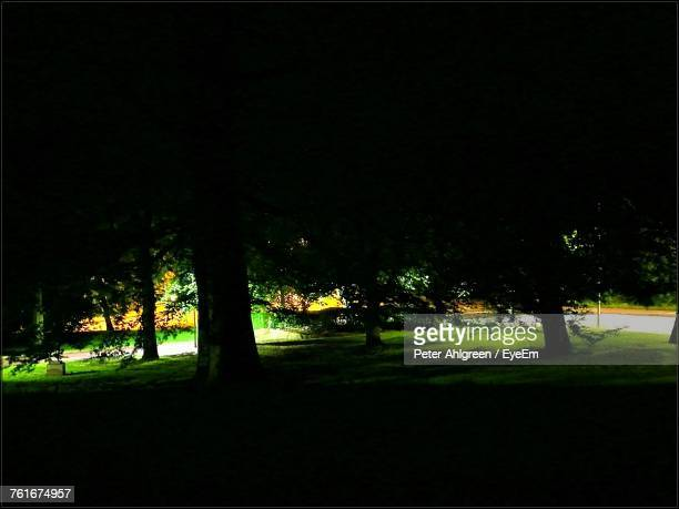 Silhouette Trees On Landscape At Night