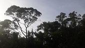In southern Brazil
