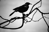 Silhouetted bird on branch