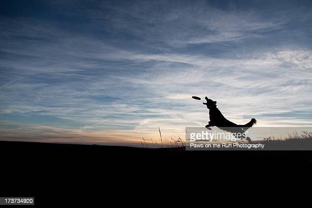 Silhouetted Dog Catching a Frisbee