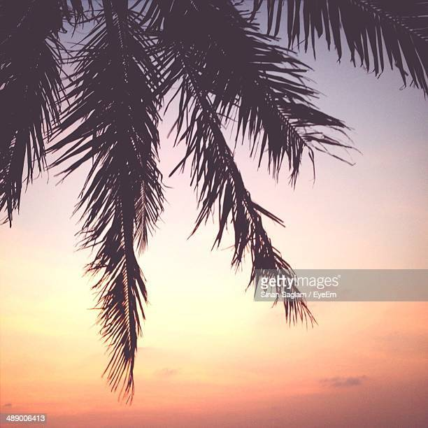 Silhouetted image of palm tree at beach