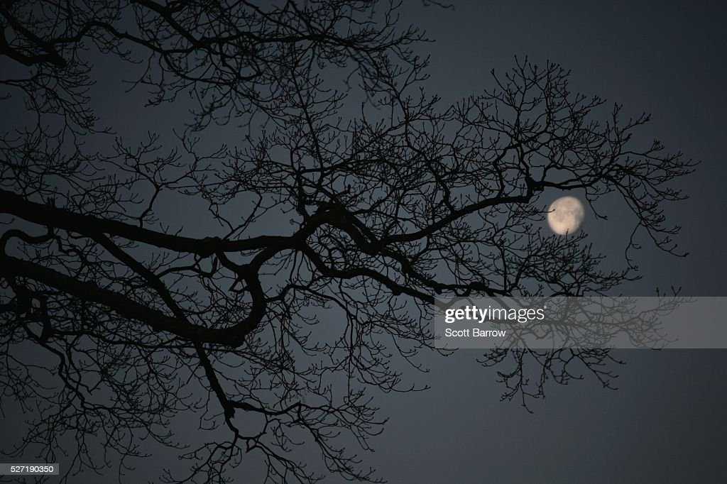 Silhouetted tree at night : Foto de stock
