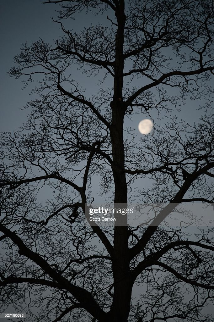 Silhouetted tree at night : Stockfoto