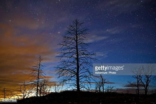 Silhouetted Tree in Burn Area Night Sky with Stars